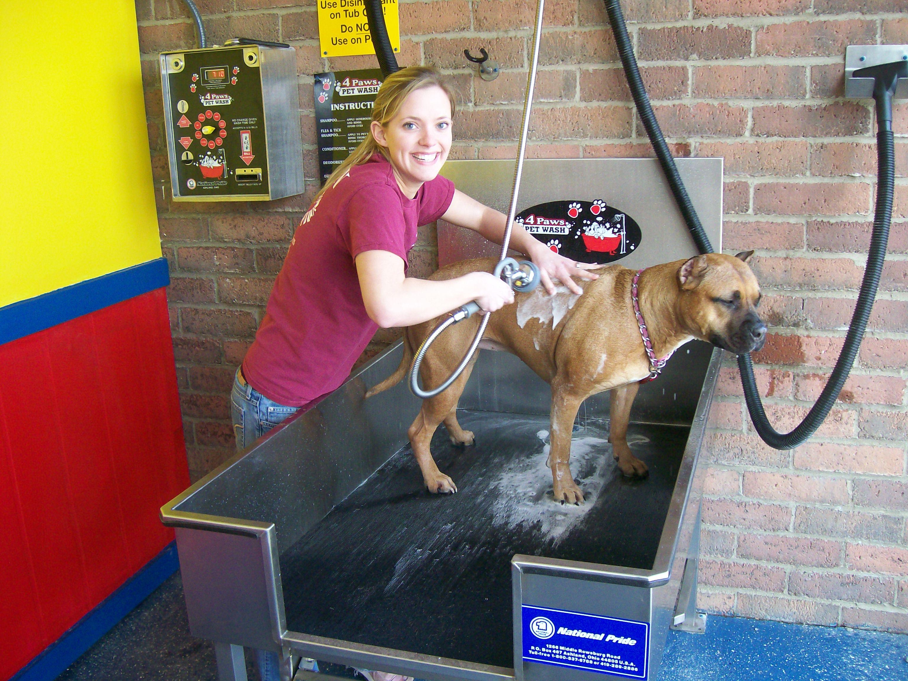 Selling My Dog Wash Equipment « Car Wash Business 101